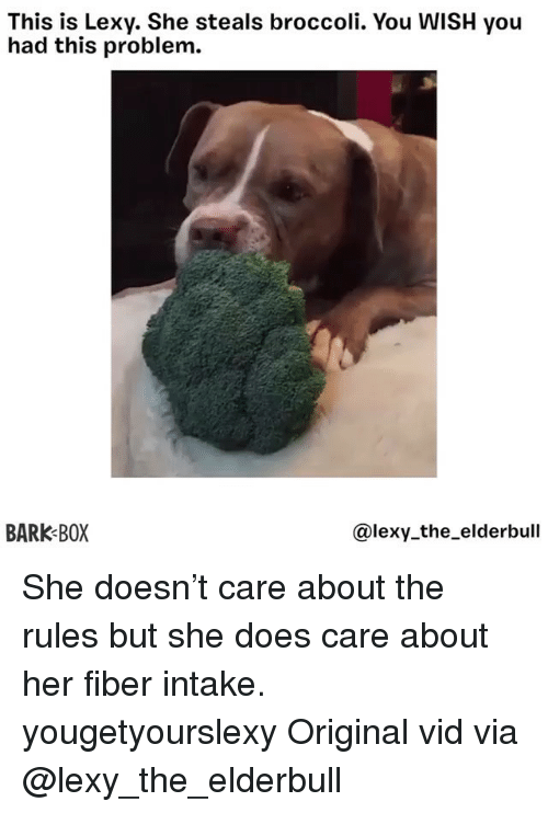 Memes, 🤖, and Her: This is Lexy. She steals broccoli. You WISH you  had this problem.  BARK BOX  @lexy the_elderbull She doesn't care about the rules but she does care about her fiber intake. yougetyourslexy Original vid via @lexy_the_elderbull