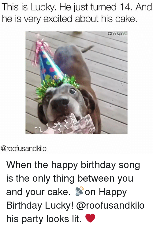 Birthday, Lit, and Memes: This is Lucky. He just turned 14. And  he is very excited about his cake.  @barkpost  @roof usandkilo When the happy birthday song is the only thing between you and your cake. 📡on Happy Birthday Lucky! @roofusandkilo his party looks lit. ❤