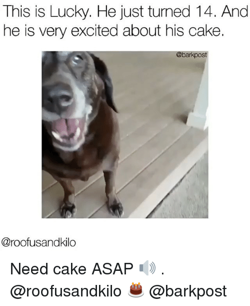 Memes, Cake, and Excite: This is Lucky. He just turned 14. And  he is very excited about his cake  @bark st  @roofusandkilo Need cake ASAP 🔊 . @roofusandkilo 🎂 @barkpost