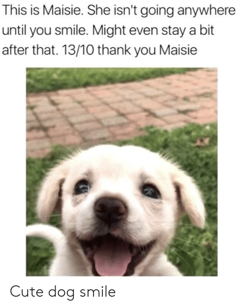 Cute, Thank You, and Smile: This is Maisie. She isn't going anywhere  until you smile. Might even stay a bit  after that. 13/10 thank you Maisie Cute dog smile