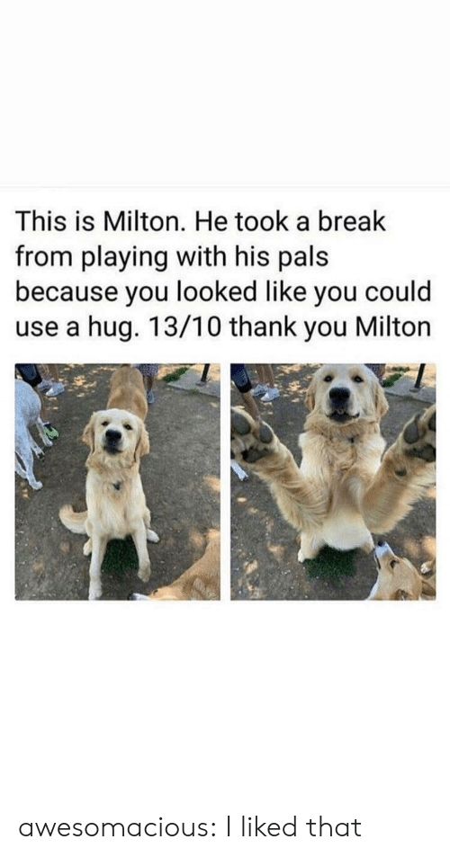 Tumblr, Thank You, and Blog: This is Milton. He took a break  from playing with his pals  because you looked like you could  use a hug. 13/10 thank you Milton awesomacious:  I liked that