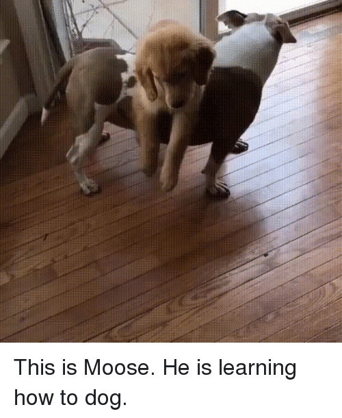 How To, How, and Dog: This is Moose. He is learning how to dog.