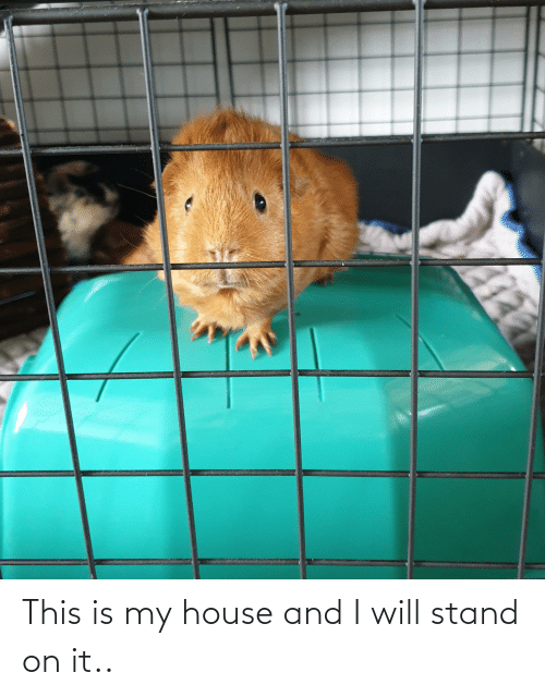 My House, House, and Will: This is my house and I will stand on it..