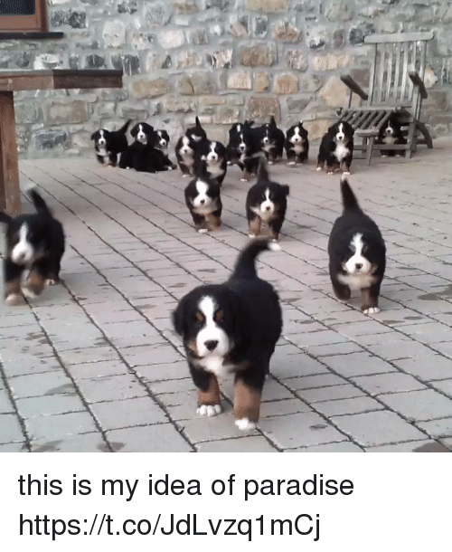 Paradise, Girl Memes, and Idea: this is my idea of paradise https://t.co/JdLvzq1mCj