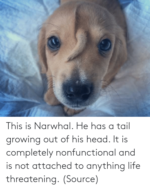 Aww, Head, and Life: This is Narwhal. He has a tail growing out of his head. It is completely nonfunctional and is not attached to anything life threatening.(Source)