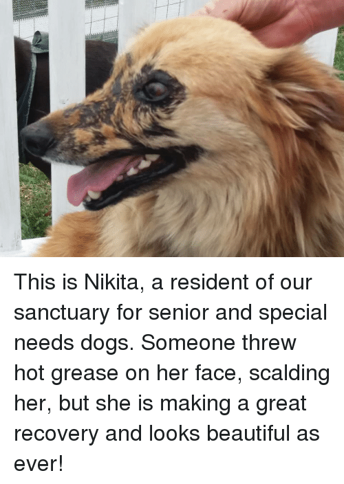 Beautiful, Dogs, and Grease