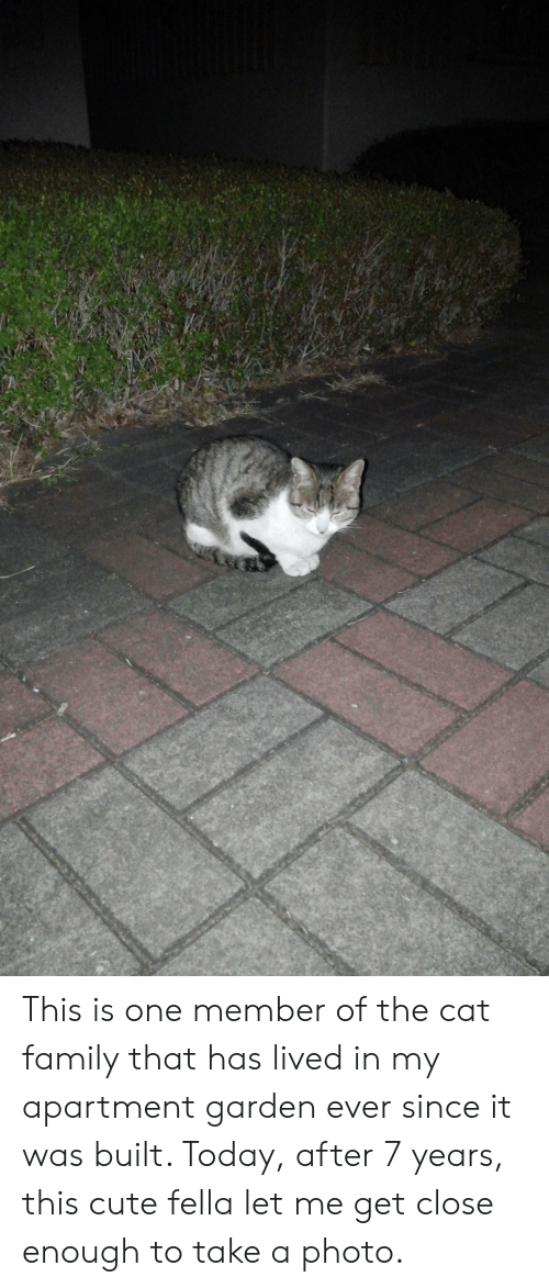 Cute, Family, and Today: This is one member of the cat family that has lived in my apartment garden ever since it was built. Today, after 7 years, this cute fella let me get close enough to take a photo.