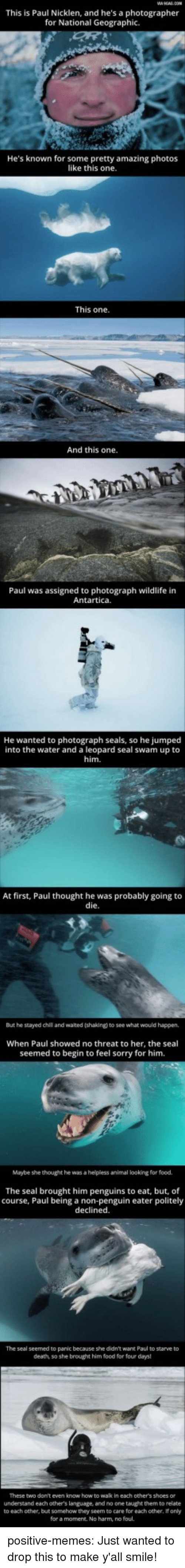 Food, Memes, and Shoes: This is Paul Nicklen, and he's a photographer  for National Geographic.  He's known for some pretty amazing photos  like this one  This one  And this one.  Paul was assigned to photograph wildlife in  Antartica.  He  wanted to photograph seals, so he jumped  into the water and a leopard seal swam up to  him.  At first, Paul thought he was probably going to  die  But he stayed chil and waited (shaking) to see what would happen,  When Paul showed no threat to her, the seal  seemed to begin to feel sorry for him.  Maybe she thought he was a helpless animal looking for food.  The seal brought him penguins to eat, but, of  course, Paul being a non-penguin eater politely  declined.  The seal seemed to panic because she didn't want Paul to starve to  death, so she brought him food for four days  These two don't even know how to wak in each other's shoes or  understand each others language, and no one taught them to relate  to each other, but somehow they seem to care for each other, If only  for a moment. No harm, no foul. positive-memes:  Just wanted to drop this to make y'all smile!