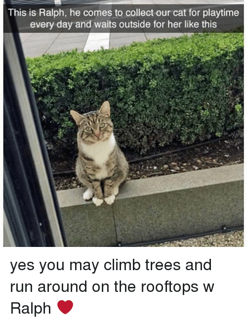 Memes, Run, and Trees: This is Ralph, he comes to collect our cat for playtime  every day and waits outside for her like this yes you may climb trees and run around on the rooftops w Ralph ❤️