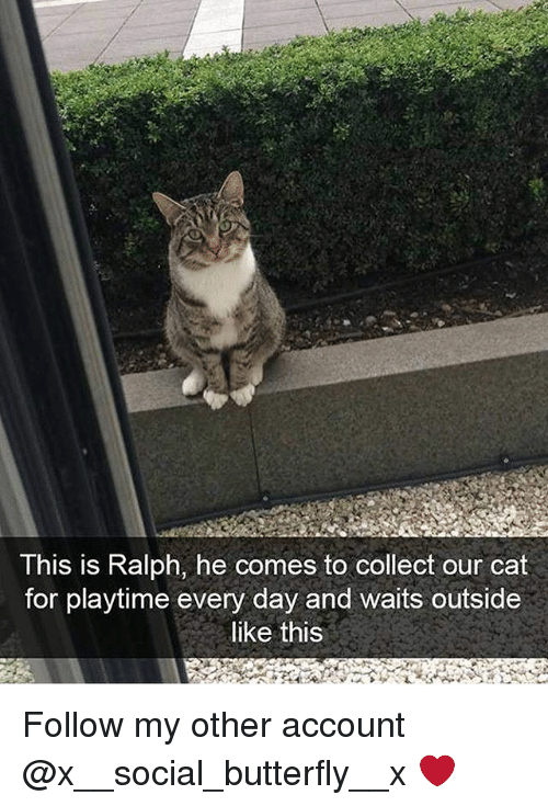 Memes, Butterfly, and 🤖: This is Ralph, he comes to collect our cat  for playtime every day and waits outside  like this Follow my other account @x__social_butterfly__x ❤️