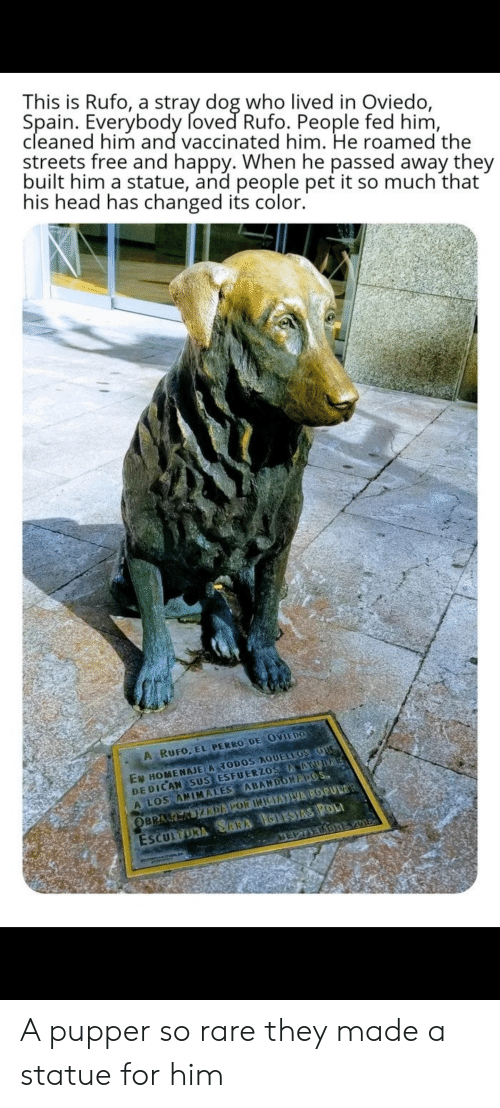 Head, Streets, and Free: This is Rufo, a stray dog who lived in Oviedo,  Spain. Everybody foved Rufo. People fed him,  cleaned him and vaccinated him. He roamed the  streets free and happy. When he passed away they  built him a statue, and people pet it so much that  his head has changed its color.  A RUFO. EL PERRO DE OVIEDO  EN HOMENAJE A TODOS AQUELLOS oUE  DE DICAN SUS ESFUERZOS YUDIRE  A LOS ANIMALES ABANDONADOS.  ESCULTORA SARA CLESIAS POLI  EPTIELABRE Z054  OBRAREKUIZRDAPOR INJCUATIVA POPULAR A pupper so rare they made a statue for him