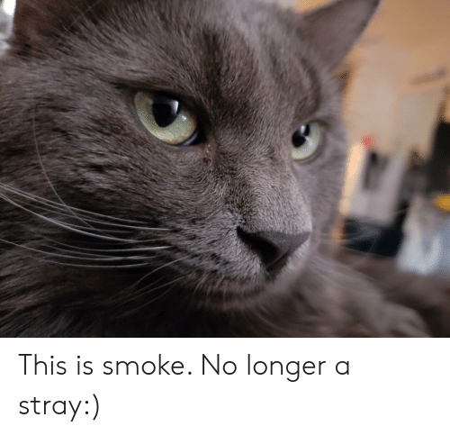 This, This Is, and Smoke: This is smoke. No longer a stray:)