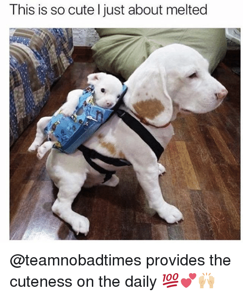 Cute, Memes, and 🤖: This is so cute l just about melted @teamnobadtimes provides the cuteness on the daily 💯💕🙌🏼