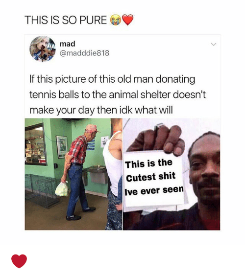 Memes, Old Man, and Shit: THIS IS SO PURE  mad  @madddie818  If this picture of this old man donating  tennis balls to the animal shelter doesn't  make your day then idk what will  This is the  Cutest shit  Ive ever seen ❤️