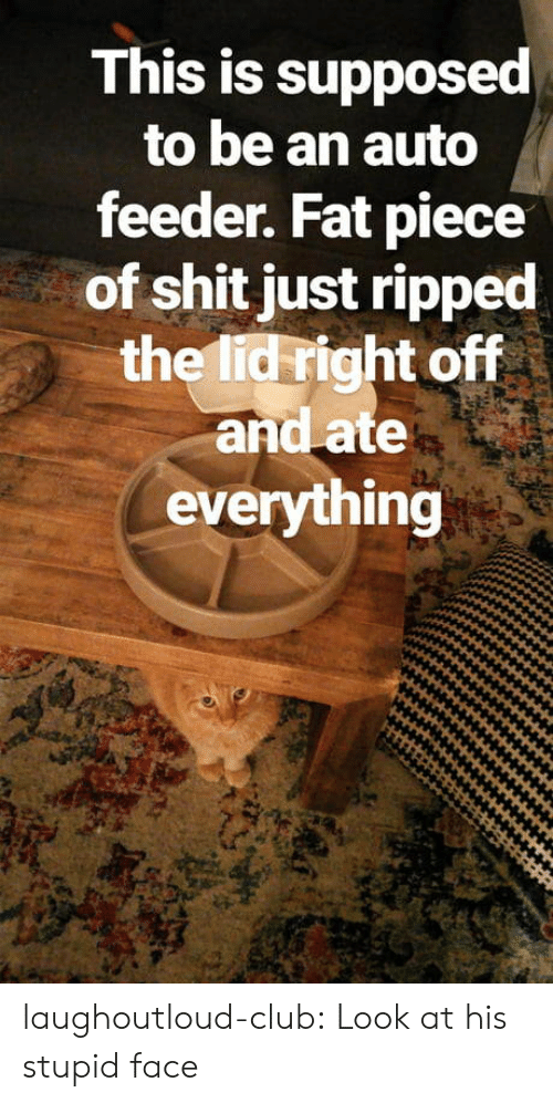 Club, Shit, and Tumblr: This is supposed  to be an auto  feeder. Fat piece  of shit just ripped  the lid right off  and ate  everything laughoutloud-club:  Look at his stupid face
