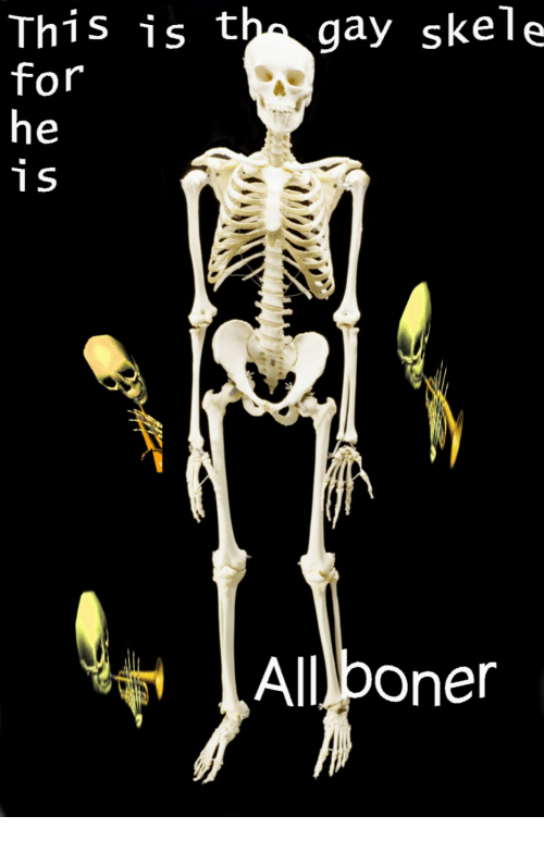 Boner Gay And All This Is Th Gay Skele All Boner