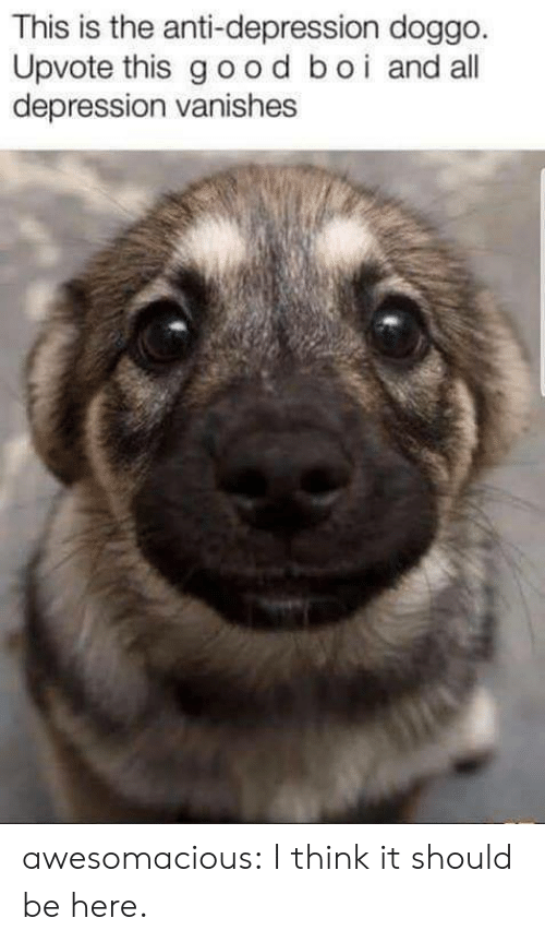 Tumblr, Blog, and Depression: This is the anti-depression doggo  Upvote this good boi and all  depression vanishes awesomacious:  I think it should be here.