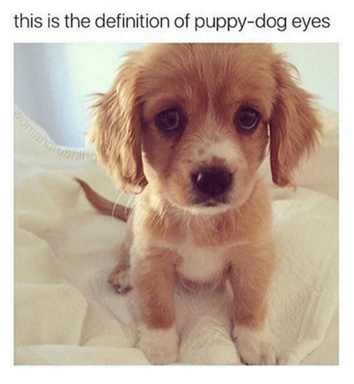 25 Best Sad Puppy Memes Puppy Dog Memes I Just Want To Memes