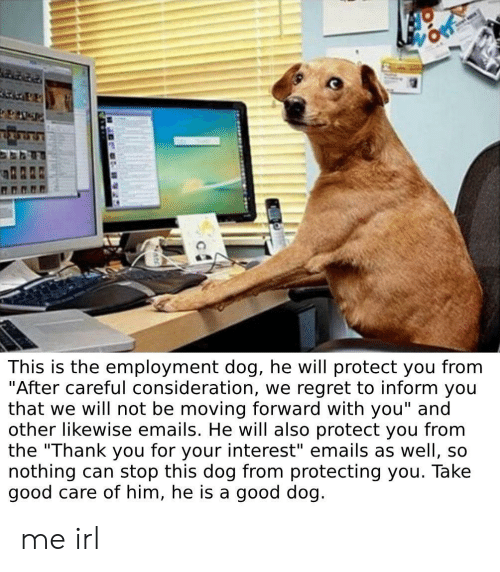 """Regret, Thank You, and Good: This is the employment dog, he will protect you from  """"After careful consideration, we regret to inform you  that we will not be moving forward with you"""" and  other likewise emails. He will also protect you from  the """"Thank you for your interest"""" emails as well, so  nothing can stop this dog from protecting you. Take  good care of him, he is a good dog. me irl"""