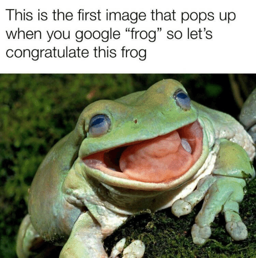 "Google, Image, and Frog: This is the first image that pops up  when you google ""frog"" so let's  congratulate this frog"