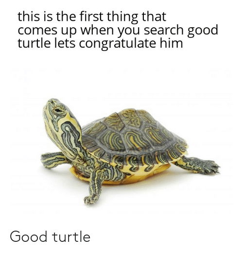 Reddit, Good, and Search: this is the first thing that  comes up when you search good  turtle lets congratulate him Good turtle