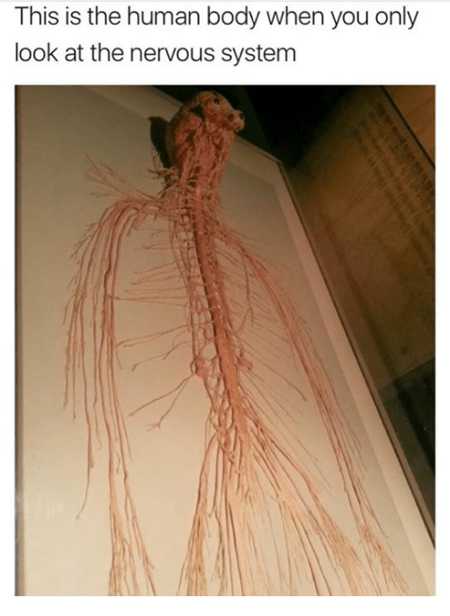 This Is The Human Body When You Only Look At The Nervous System