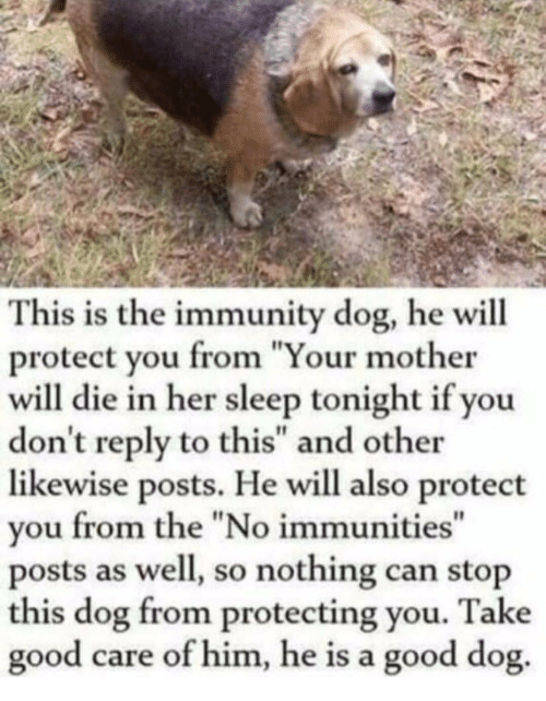 "Good, Sleep, and Her: This is the immunity dog, he will  protect you from ""Your mother  will die in her sleep tonight if you  don't reply to this"" and other  likewise posts. He will also protect  you from the ""No immunities""  posts as well, so nothing can stop  this dog from protecting you. Take  good care of him, he is a good dog.  I1"