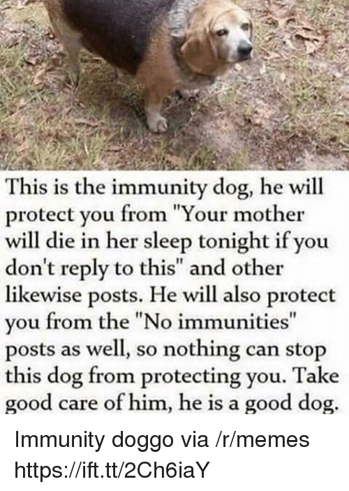 """Memes, Good, and Sleep: This is the immunity dog, he will  protect you from """"Your mother  will die in her sleep tonight if you  don't reply to this"""" and other  likewise posts. He will also protect  you from the """"No immunities  posts as well, so nothing can stop  this dog from protecting you. Take  good care of him, he is a good dog Immunity doggo via /r/memes https://ift.tt/2Ch6iaY"""