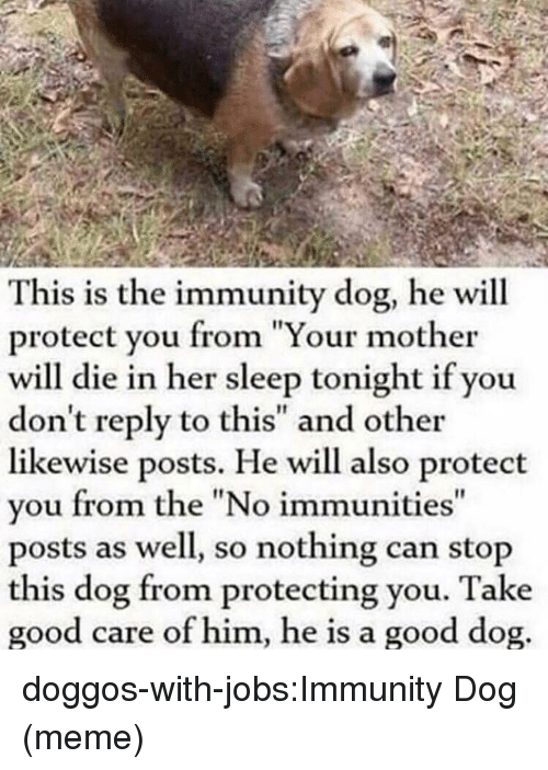 "Meme, Tumblr, and Blog: This is the immunity dog, he will  protect you from ""Your mother  will die in her sleep tonight if you  don't reply to this"" and other  likewise posts. He will also protect  vou from the ""No immunities  posts as well, so nothing can stop  this dog from protecting you. Take  good care of him, he is a good dog  It doggos-with-jobs:Immunity Dog (meme)"