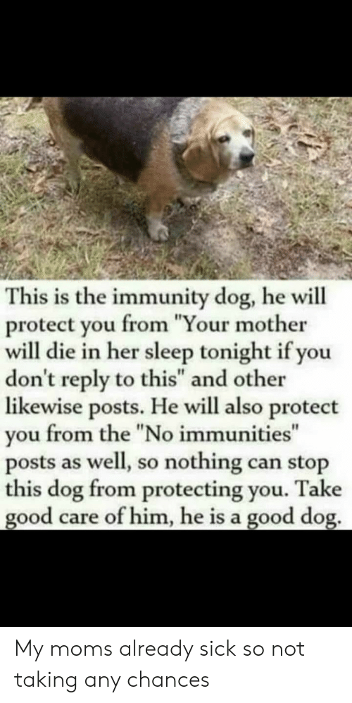 "Moms, Good, and Sick: This is the immunity dog, he will  protect you from ""Your mother  will die in her sleep tonight if you  don't reply to this"" and other  likewise posts. He will also protect  you from the ""No immunities""  posts as well, so nothing can stop  this dog from protecting you. Take  good care of him, he is a good dog. My moms already sick so not taking any chances"
