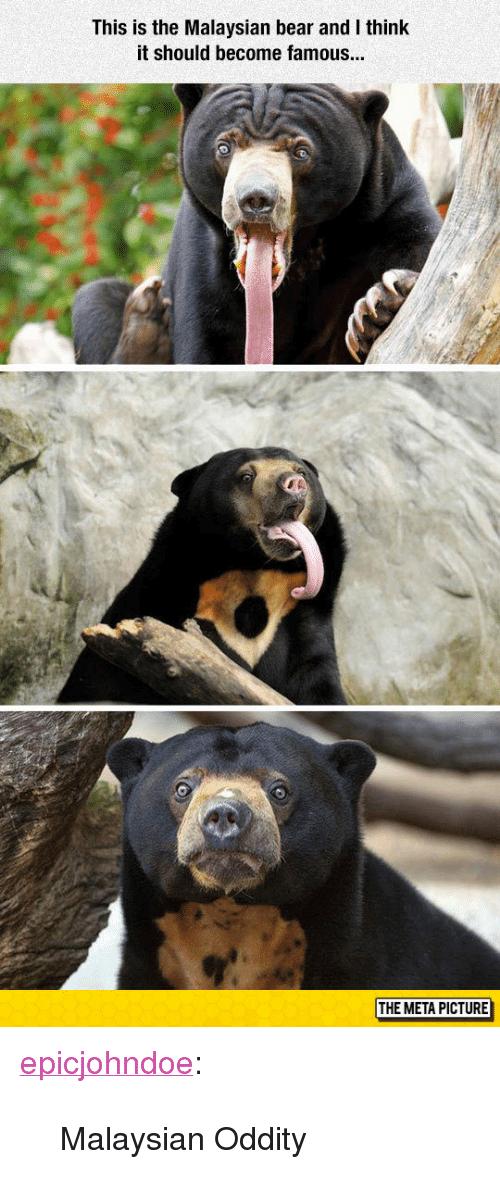 """Tumblr, Bear, and Blog: This is the Malaysian bear and I think  it should become famous  THE META PICTURE <p><a href=""""https://epicjohndoe.tumblr.com/post/173203426639/malaysian-oddity"""" class=""""tumblr_blog"""">epicjohndoe</a>:</p>  <blockquote><p>Malaysian Oddity</p></blockquote>"""