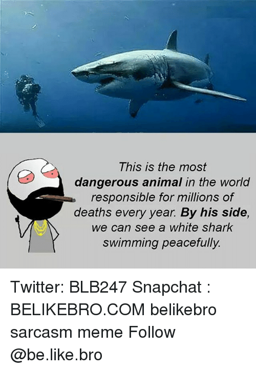 Be Like, Meme, and Memes: This is the most  dangerous animal in the world  responsible for millions of  deaths every year. By his side,  we can see a white shark  swimming peacefully. Twitter: BLB247 Snapchat : BELIKEBRO.COM belikebro sarcasm meme Follow @be.like.bro