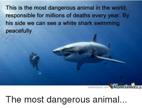 Animals, Anime, and Meme: This is the most dangerous animal in the world,  responsible for millions of deaths every year. By  his side we can see a white shark swimming  peacefully  Meme Center  meme Center.com The most dangerous animal...