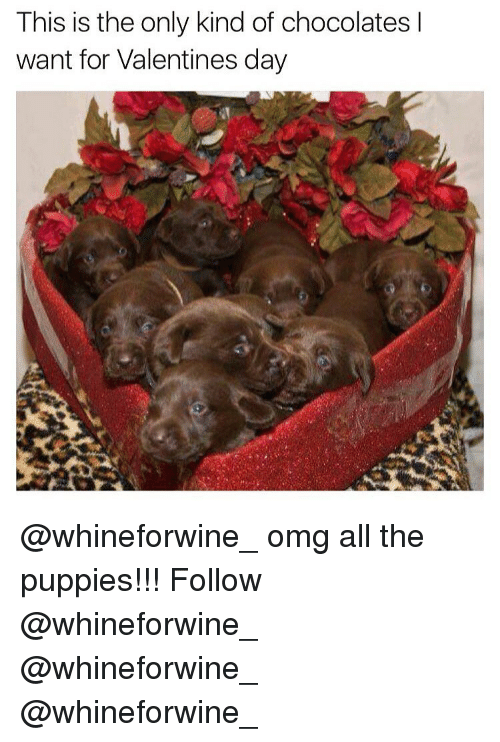 Memes, 🤖, and Valentine: This is the only kind of chocolates I  want for Valentines day @whineforwine_ omg all the puppies!!! Follow @whineforwine_ @whineforwine_ @whineforwine_