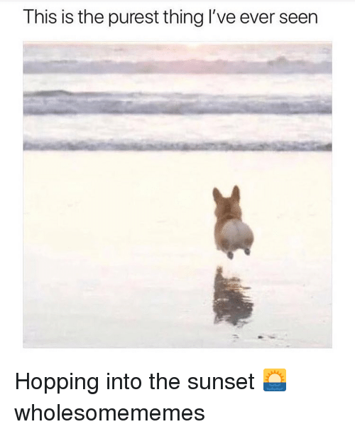 Memes, Sunset, and 🤖: This is the purest thing l've ever seen Hopping into the sunset 🌅 wholesomememes