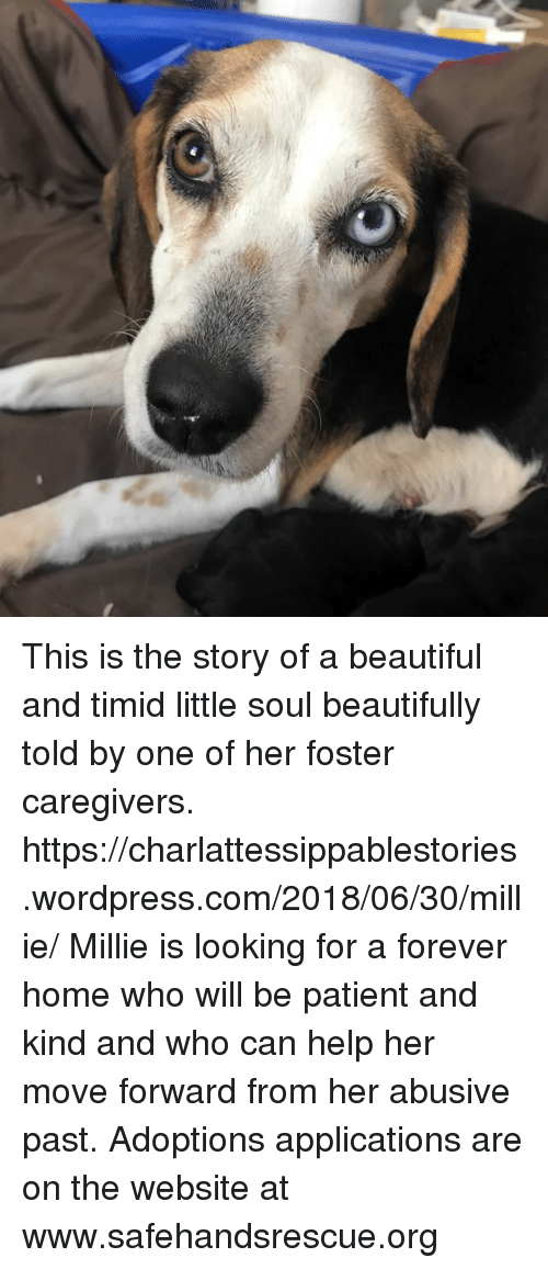Beautiful, Memes, and Forever: This is the story of a beautiful and timid little soul beautifully told by one of her foster caregivers.  https://charlattessippablestories.wordpress.com/2018/06/30/millie/    Millie is looking for a forever home who will be patient and kind and who can help her move forward from her abusive past.  Adoptions applications are on the website at www.safehandsrescue.org