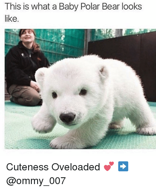 Baby, It's Cold Outside, Cute, and Bear: This is what a Baby Polar Bear looks  like Cuteness Oveloaded 💕 ➡️ @ommy_007