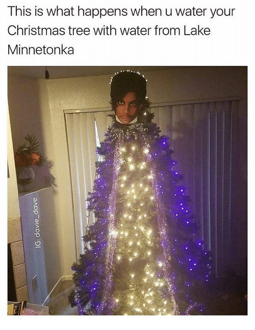 memes christmas tree and tree this is what happens when u water your