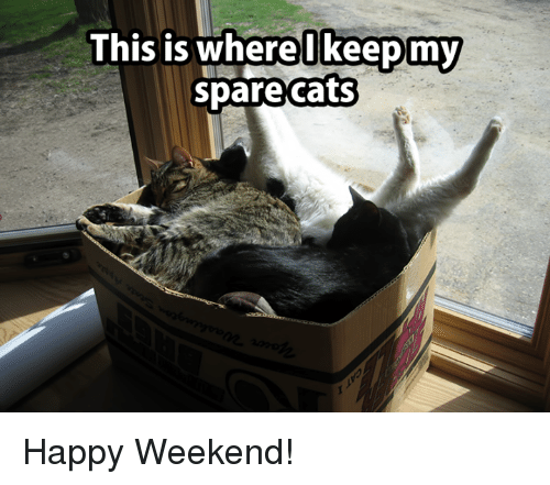 Image result for happy weekend cat pictures