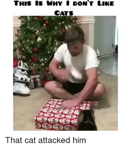 ✅ 25+ Best Memes About When Cats Attack   When Cats Attack Memes
