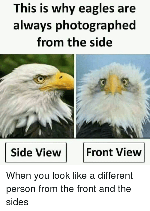 Philadelphia Eagles, Funny, and Why: This is why eagles are  always photographed  from the side  Side View  Front View