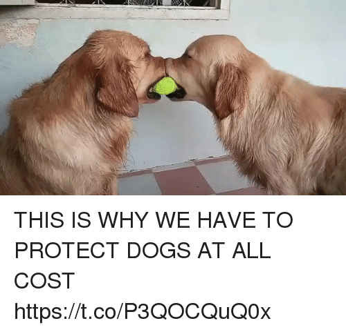Home Market Barrel Room Trophy Room ◀ Share Related ▶ Dogs Funny why all this this is protects protecting protective Protect This Is Why Have next THIS IS WHY WE HAVE TO PROTECT DOGS AT ALL COST https://t.co/P3QOCQuQ0x collect meme → Embed it next → THIS IS WHY WE HAVE TO PROTECT DOGS AT ALL COST httpstcoP3QOCQuQ0x Meme Dogs Funny why all this this is protects protecting protective Protect This Is Why Have Dogs Dogs Funny Funny why why all all this this this is this is protects protects protecting protecting protective protective Protect Protect This Is Why This Is Why Have Have found @ 132 likes ON 2017-09-12 18:43:56 BY me.me source: twitter view more on me.me