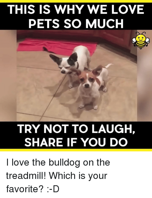 this is why we love pets so much try not to laugh share if you do i