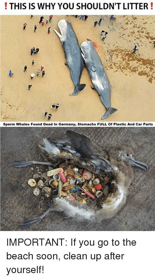 This Is Why You Shouldn T Litter Sperm Whales Found Dead In Germany