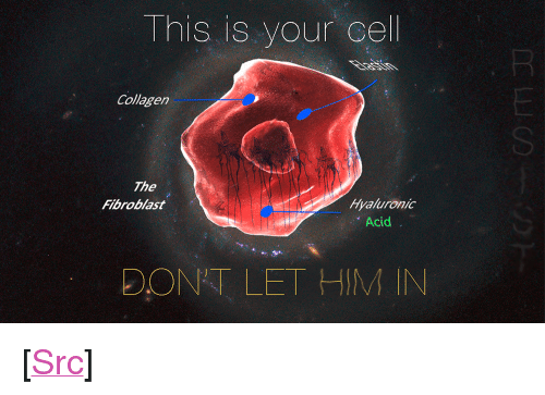 """Reddit, Com, and Acid: This is your cel  Collagen  SI  The  Fibroblast  Hyaluronic  Acid  DONT LET HIM IN <p>[<a href=""""https://www.reddit.com/r/surrealmemes/comments/8bkf7u/this_is_your_last_refuge/"""">Src</a>]</p>"""
