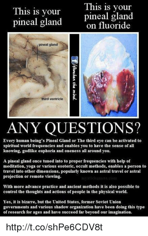Memes, Bizarre, and Godlike: This is your  This is your  pineal gland  pineal gland  on fluoride  pineal gland  third ventricle  ANY QUESTIONS?  Every human being's Pineal Gland or The tbird eye can be activated to  spiritual world frequencies and enables you to have the sense of all  knowing, godlike euphoria and oneness all around you.  A pineal gland once tuned into to proper frequencies with help of  meditation, yoga or various esoteric, occult methods, enables a person to  travel into other dimensions, popularly known as astral travel or astral  projection or remote viewing.  With more advance practice and ancient methods it is also possible to  control the thoughts and actions of people in the physical world.  Yes, it is bizarre, but the United States, former Soviet Union  governments and various shadow organization have been doing this type  of research for ages and have succeed far beyond our imagination. http://t.co/shPe6CDV8t