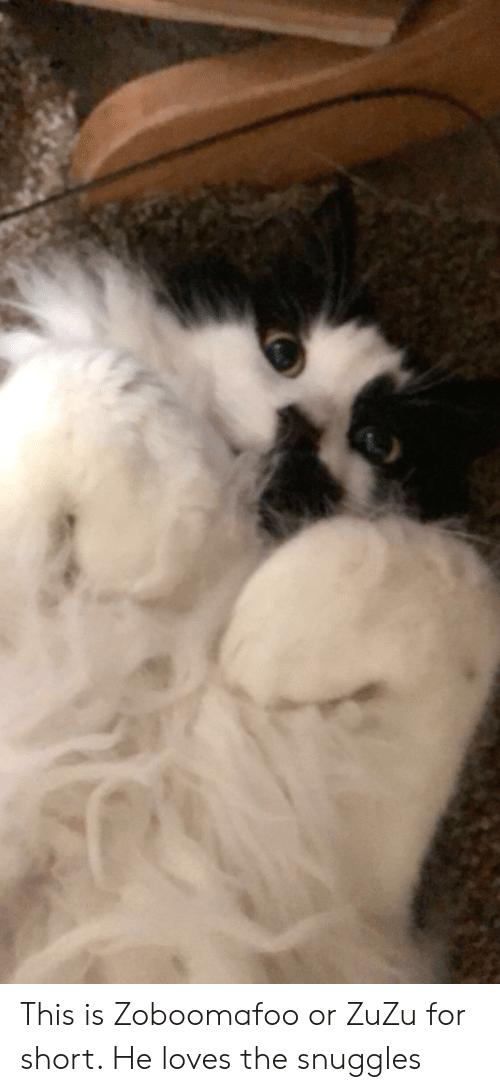 This Is Zoboomafoo or ZuZu for Short He Loves the Snuggles