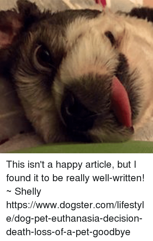 Memes, Death, and Happy: This isn't a happy article, but I found it to be really well-written!  ~  Shelly   https://www.dogster.com/lifestyle/dog-pet-euthanasia-decision-death-loss-of-a-pet-goodbye