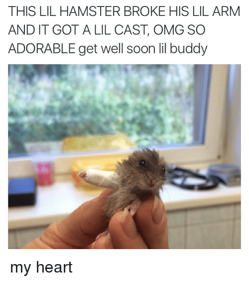 Omg, Soon..., and Hamster: THIS LIL HAMSTER BROKE HIS LIL ARM  AND IT GOT A LIL CAST OMG SO  ADORABLE get well soon lil buddy my heart