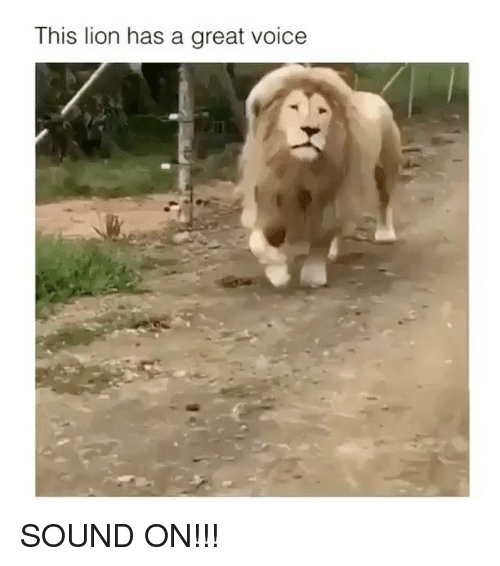 40156d2f3 Lion, Voice, and Girl Memes: This lion has a great voice SOUND ON
